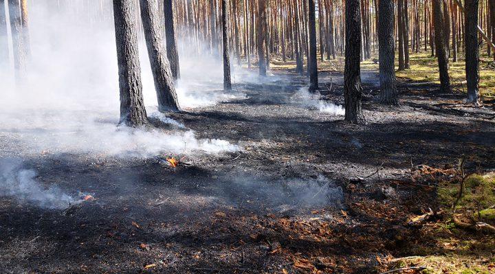Waldbrand am 23. April 2020 zwischen dem Storkower Ortsteil Groß Eichholz und Birkholz (Amt Schenkenlänchen, LDS). Foto: Marcel Gäding