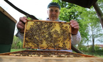 Storkow hat wieder Burgbienen