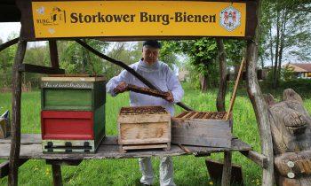 Junge Männer beschädigen Bienenstock