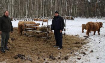 Schottische Hochlandrinder in Bugk: die Schulzes und das liebe Vieh